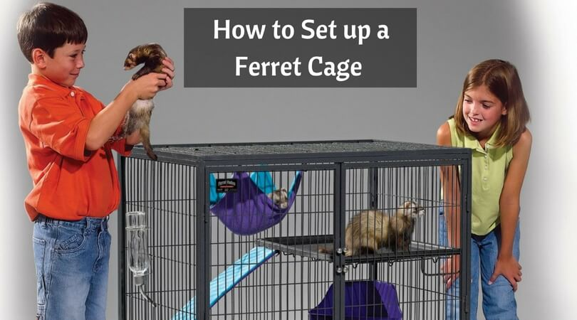 How to Set up a Ferret Cage – Top Caring Tips