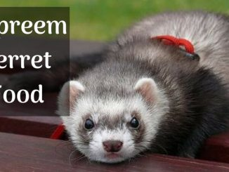 Zupreem Ferret Food