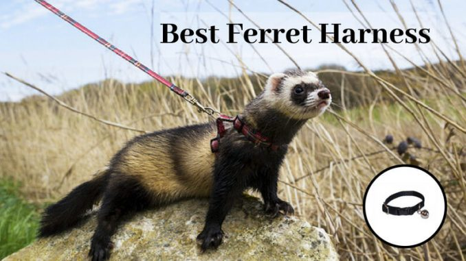Best ferret harness and leash