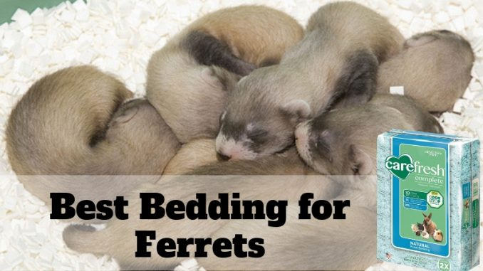 Best Bedding for Ferrets