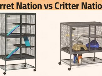 Ferret Nation vs Critter Nation