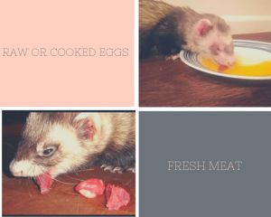 What can ferrets eat besides ferret food?