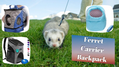 Ferret Carrier Backpack