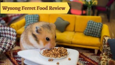Wysong Ferret Food Review