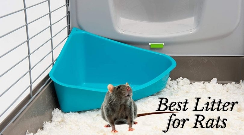 Best Litter for Rats